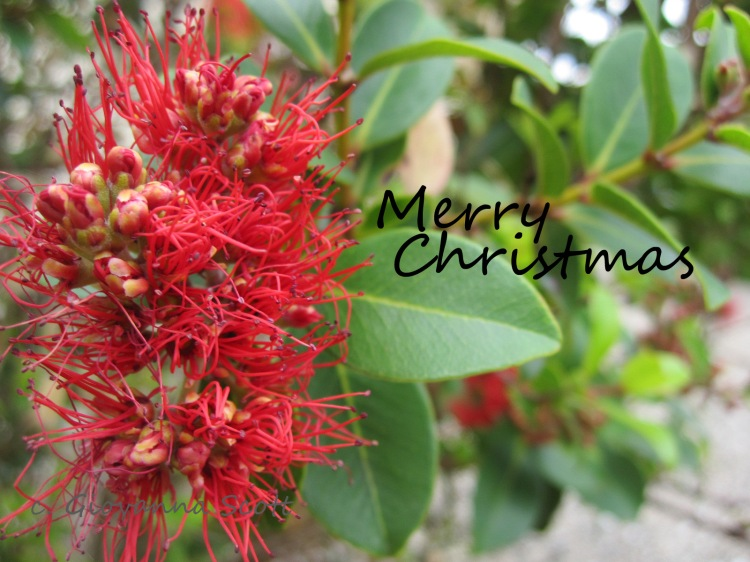 xmas greeting blog