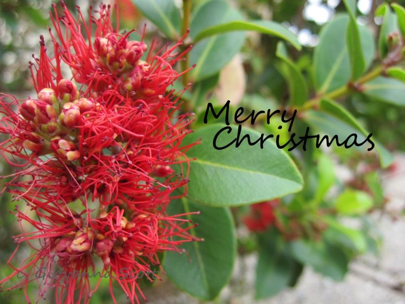xmas greeting blog